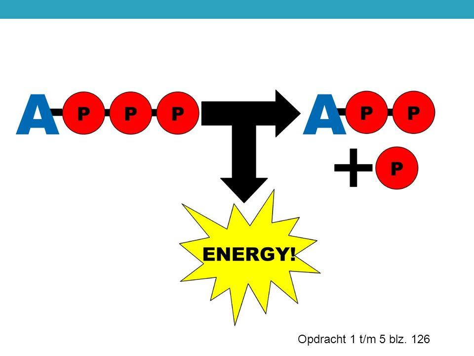 ANABOLE PROCESSEN Kost energie (biosynthese).