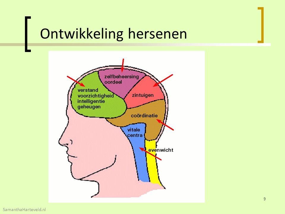 Ontwikkeling hersenen 9 SamanthaHarteveld.nl