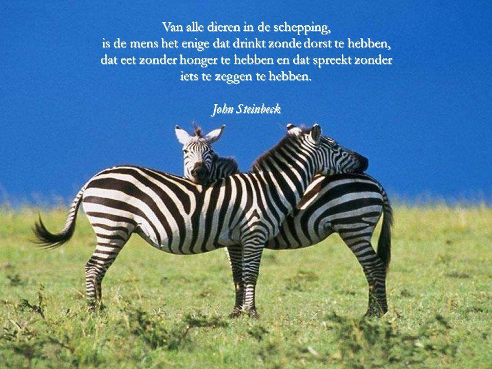 Dieren zijn zeer goede vrienden. Ze stellen geen vragen en geven geen kritiek. George Elliot