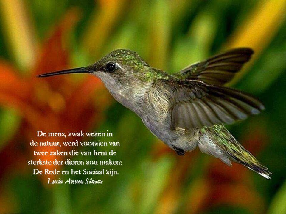 Van alle dieren in de schepping, is de mens het enige dat drinkt zonde dorst te hebben, dat eet zonder honger te hebben en dat spreekt zonder iets te zeggen te hebben.
