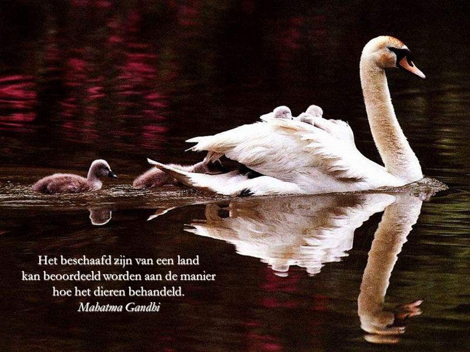 De mens, zwak wezen in de natuur, werd voorzien van twee zaken die van hem de sterkste der dieren zou maken: De Rede en het Sociaal zijn.