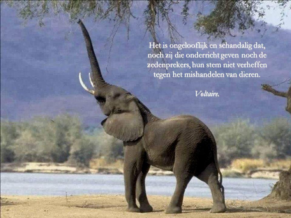 Ooit zal de dag komen dat mensen zoals ik, het doden van een dier op dezelfde wijze zullen beoordelen zoals het gebeurt bij het doden van een mens..