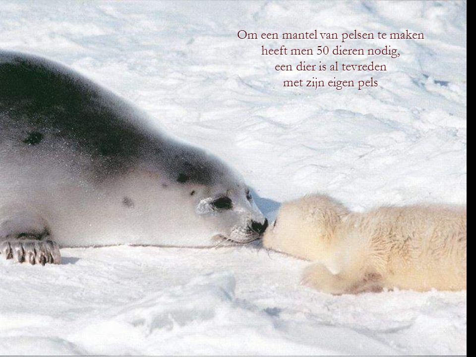 De echte koning der dieren is de mens, want zijn brutaliteit overtreft die van alle dieren.