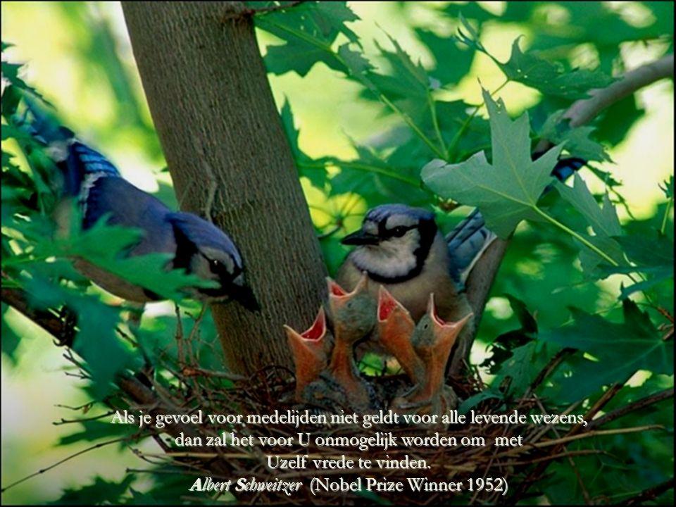 HET MEDELIJDEN, Dat gevoel verandert niet, ook al is het voor een dier, een mens of zelfs voor een boom.