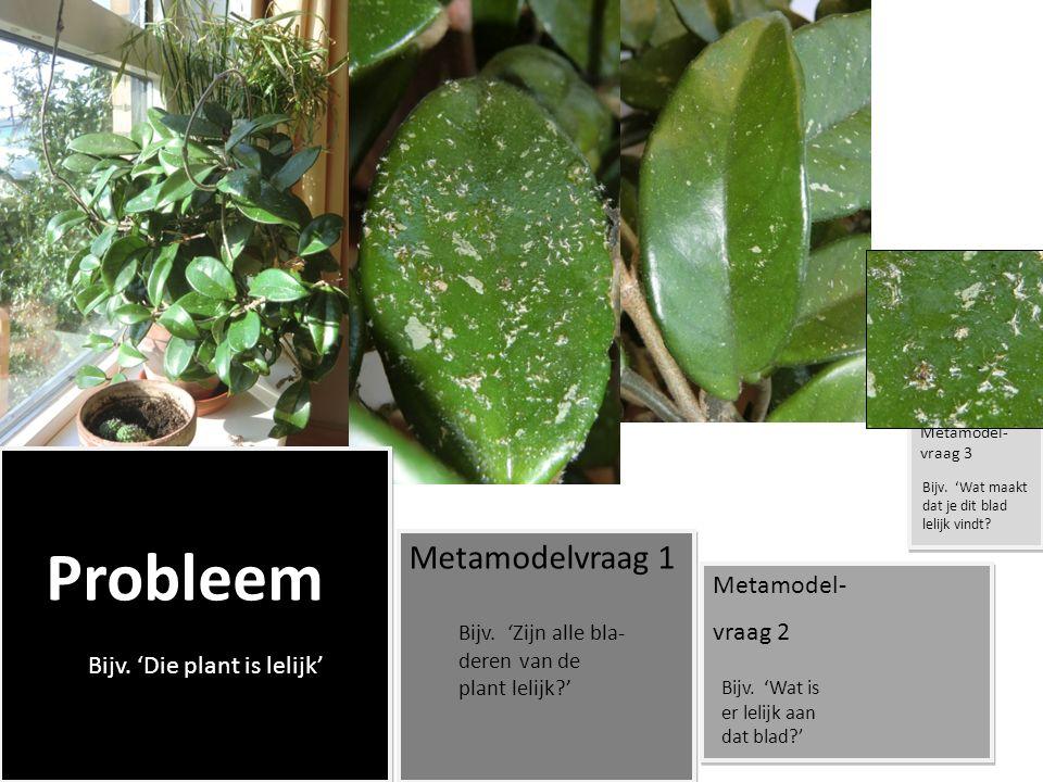Probleem Metamodelvraag 1 Metamodel- vraag 2 Metamodel- vraag 2 Metamodel- vraag 3 Probleem Bijv. 'Die plant is lelijk' Bijv. 'Zijn alle bla- deren va