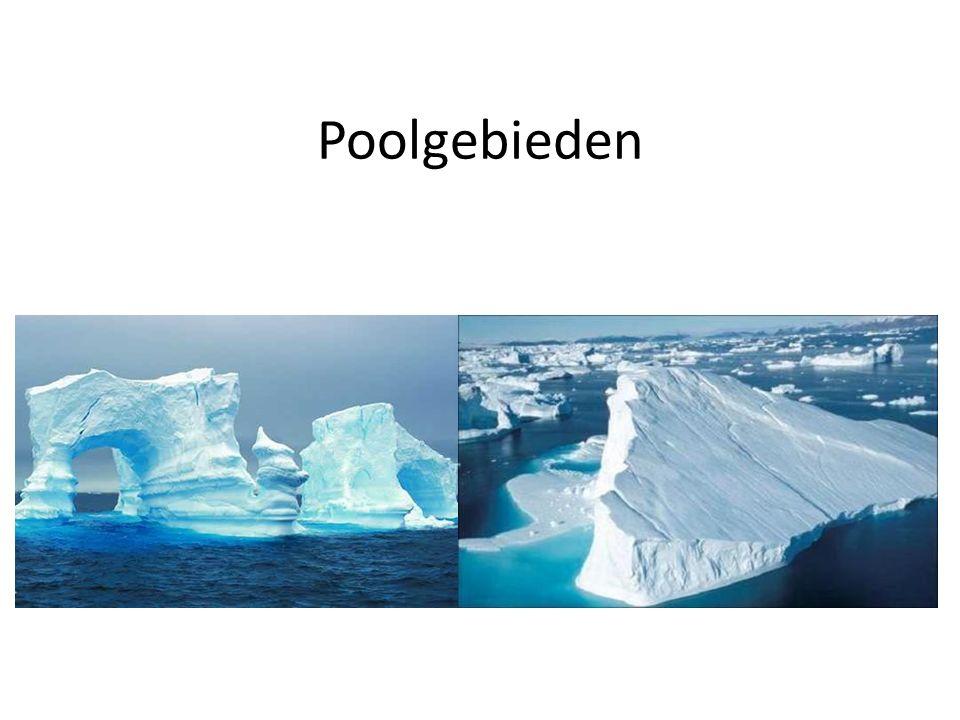 Verschillen tussen de polen: Land en zee Temperatuur Landen/continent Ontdekking van de poolgebieden Planten en dieren Samenvatting