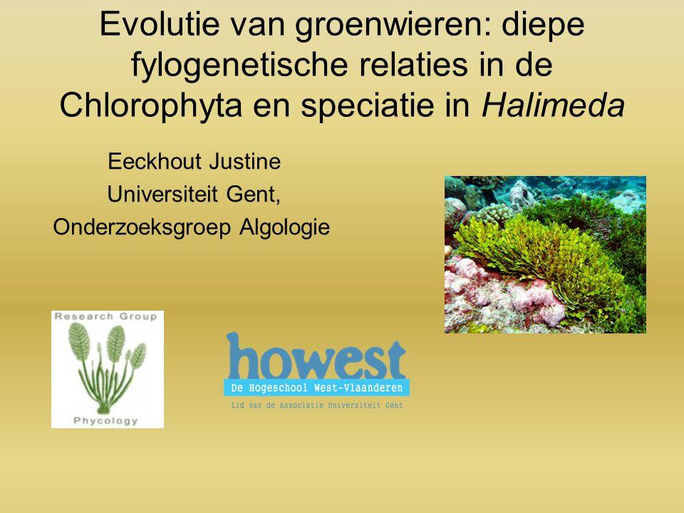 Evolutie van groenwieren: diepe fylogenetische relaties in de Chlorophyta en speciatie in Halimeda Eeckhout Justine Universiteit Gent, Onderzoeksgroep Algologie