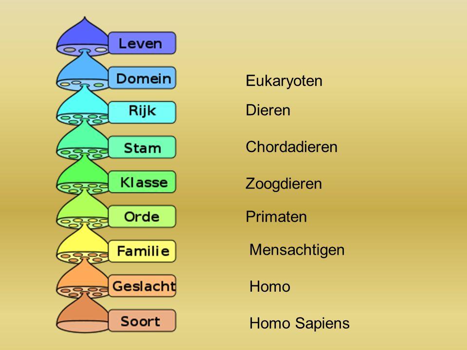 Zoogdieren Primaten Mensachtigen Homo Homo Sapiens Chordadieren Dieren Eukaryoten