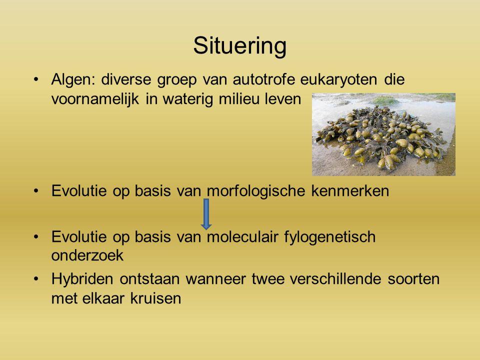 Situering Algen: diverse groep van autotrofe eukaryoten die voornamelijk in waterig milieu leven Evolutie op basis van morfologische kenmerken Evolutie op basis van moleculair fylogenetisch onderzoek Hybriden ontstaan wanneer twee verschillende soorten met elkaar kruisen