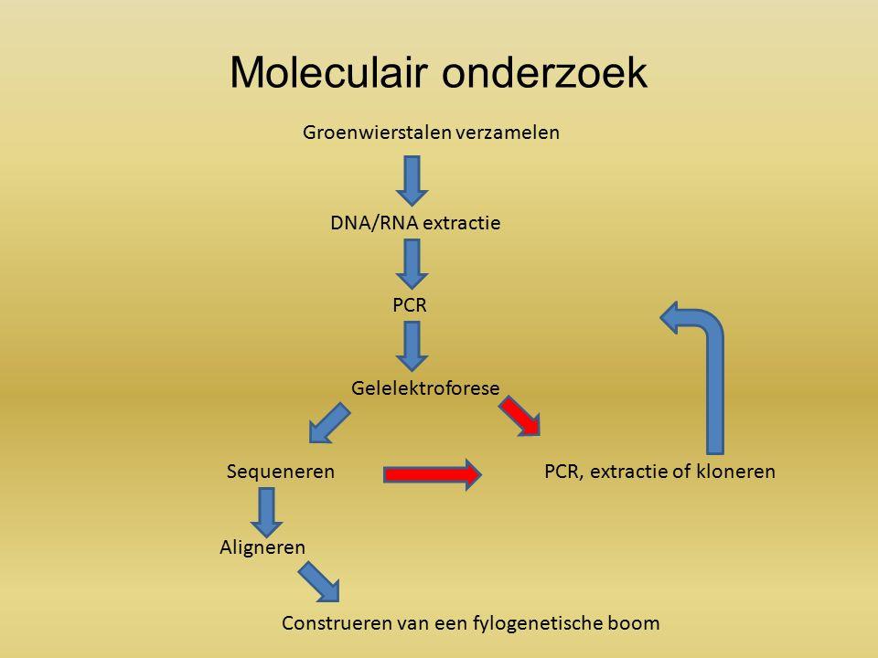 Moleculair onderzoek Groenwierstalen verzamelen DNA/RNA extractie PCR Gelelektroforese Sequeneren Aligneren Construeren van een fylogenetische boom PCR, extractie of kloneren