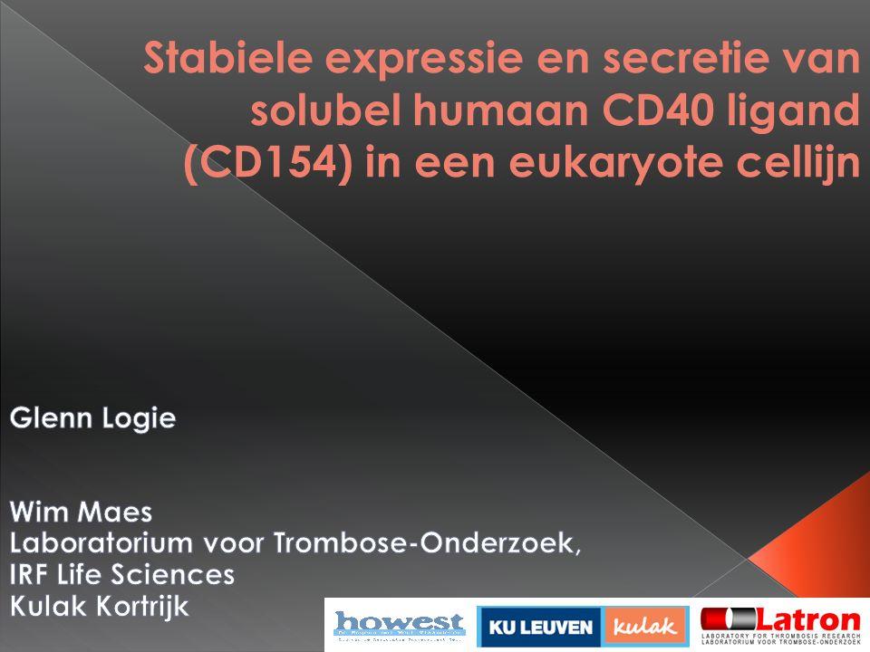 22 Secretie van sCD40L gemeten op dag 6 en 9 na selectie Detectielimiet: 16,7 ng/ml Resultaten en discussie