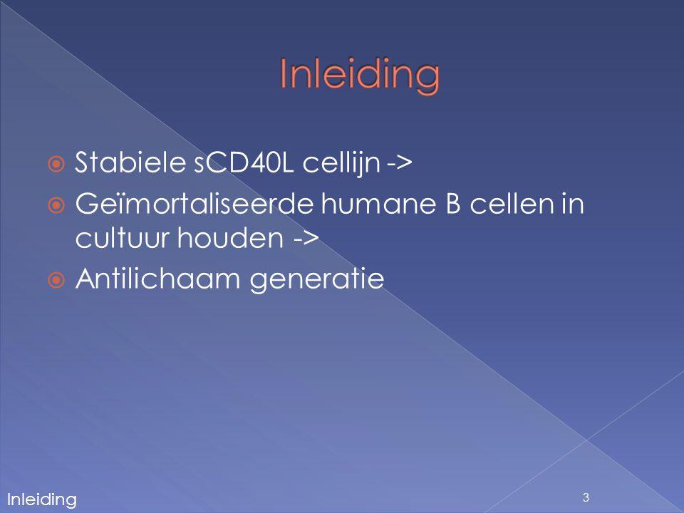  Doel: stabiele cellijn creëren die humaan sCD40L secreteert 24 Amplificatie insert Digestie vector In-Fusion klonering Transformatie Kwaliteitscontrole Plasmideopzuivering Sequenering Transfectie Secretie sCD40L Besluit