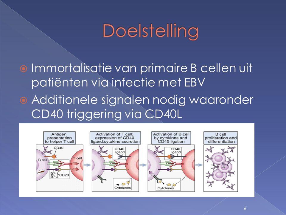  Membraangebonden › 2 populaties: B cellen + HEK cellen › -> cocultuur  Solubel › 1 populatie: B cellen 7 Inleiding