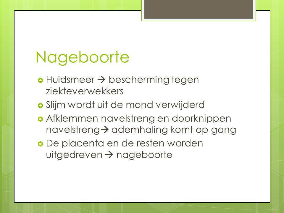 Nageboorte  Huidsmeer  bescherming tegen ziekteverwekkers  Slijm wordt uit de mond verwijderd  Afklemmen navelstreng en doorknippen navelstreng 
