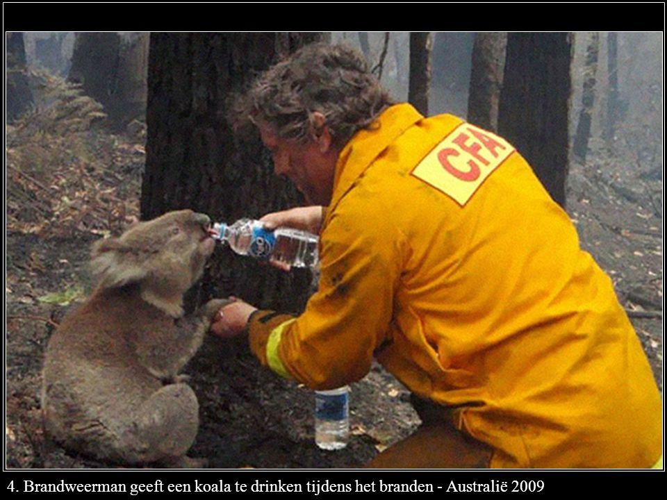 4. Brandweerman geeft een koala te drinken tijdens het branden - Australië 2009