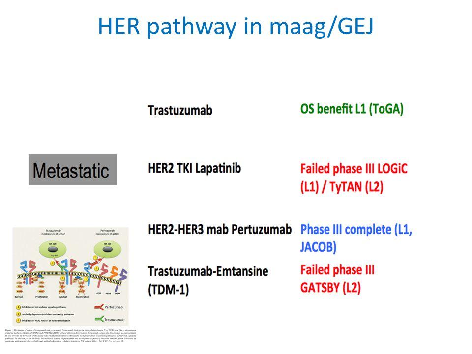 HER pathway in maag/GEJ