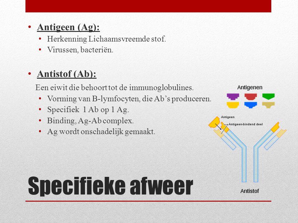 Specifieke afweer Antigeen (Ag): Herkenning Lichaamsvreemde stof. Virussen, bacteriën. Antistof (Ab): Een eiwit die behoort tot de immunoglobulines. V
