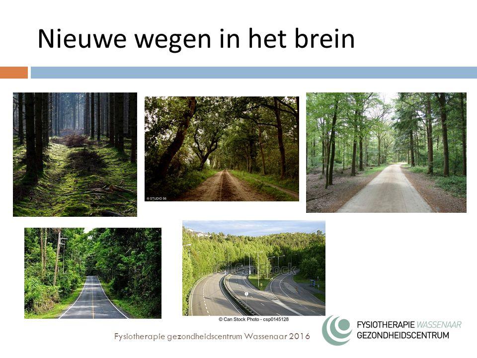Nieuwe wegen in het brein Fysiotherapie gezondheidscentrum Wassenaar 2016