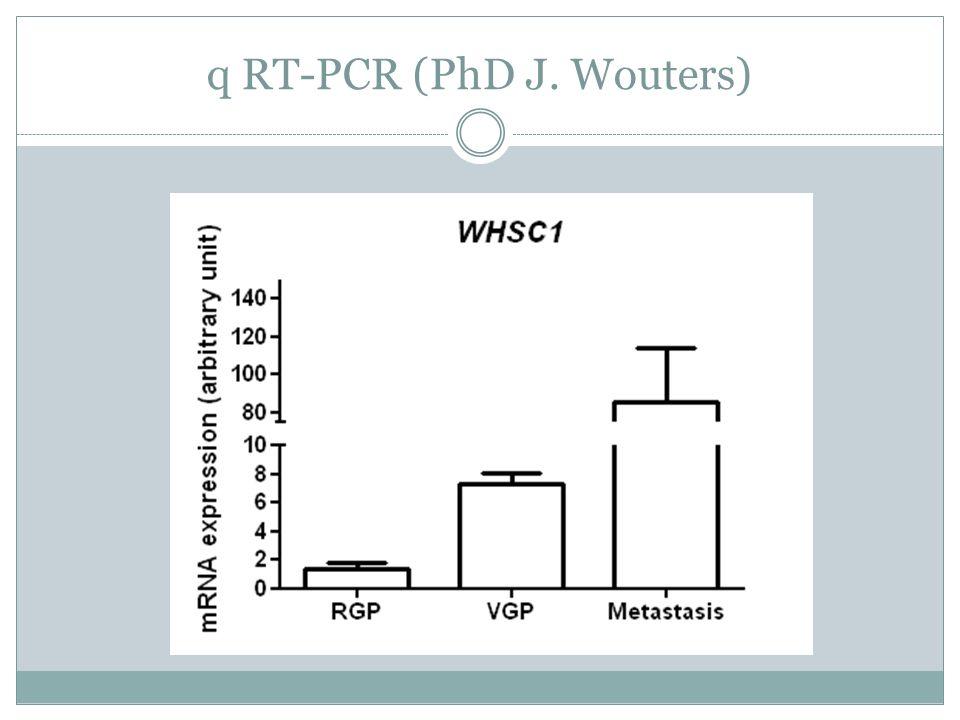 q RT-PCR (PhD J. Wouters)