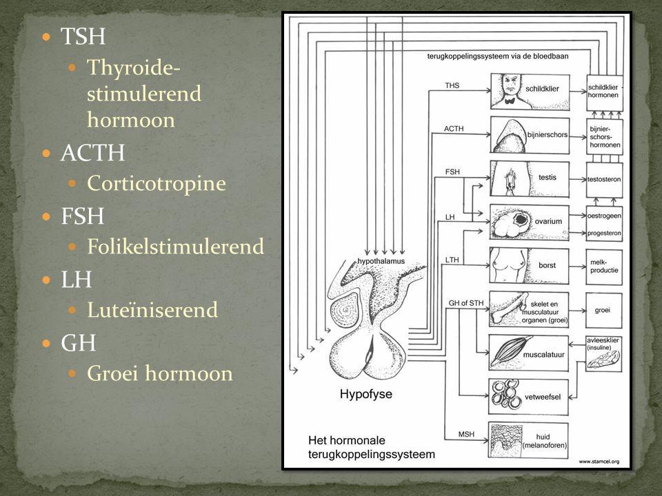 TSH Thyroide- stimulerend hormoon ACTH Corticotropine FSH Folikelstimulerend LH Luteïniserend GH Groei hormoon