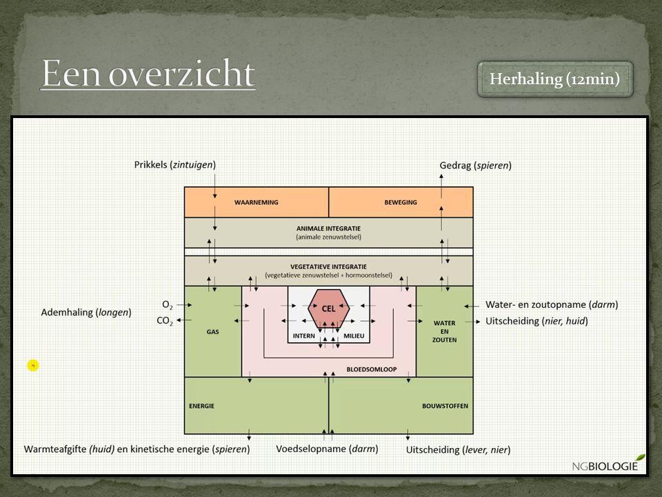 Endocrine systeem Hormoonklieren Hypofyse Schildklier Bijnieren Teelbal Eierstokken Doelwitorganen Hormoonspiegel Zenuwstls vs hormonen