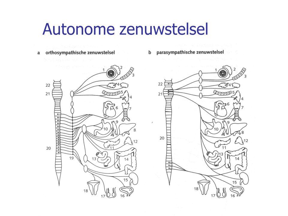Spieren Glad spierweefsel -In huid en wand van buisvormige / holle organen (o.a.