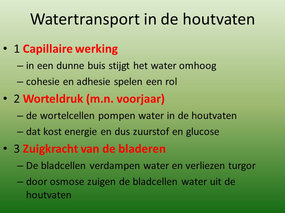 Watertransport in de houtvaten 1 Capillaire werking – in een dunne buis stijgt het water omhoog – cohesie en adhesie spelen een rol 2 Worteldruk (m.n.