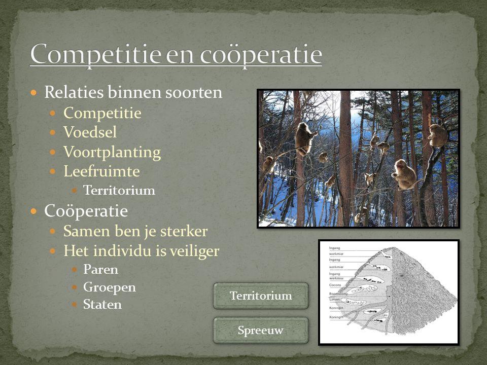 Relaties binnen soorten Competitie Voedsel Voortplanting Leefruimte Territorium Coöperatie Samen ben je sterker Het individu is veiliger Paren Groepen Staten Spreeuw Territorium