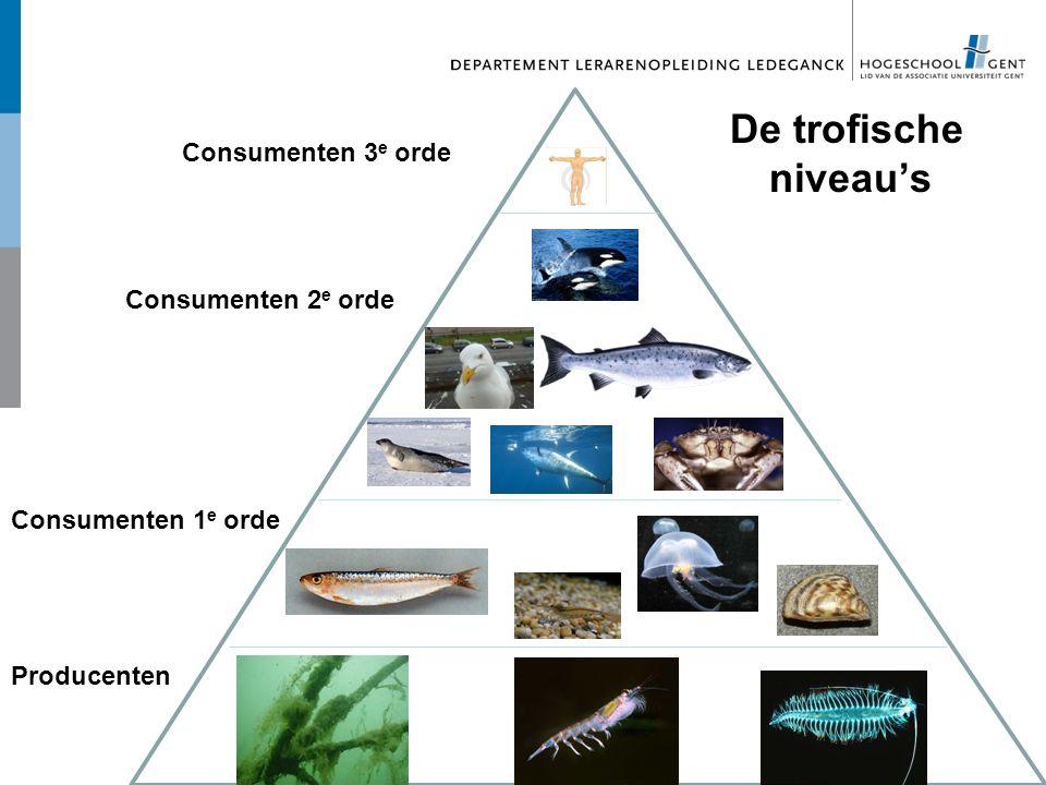 Producenten Consumenten 1 e orde Consumenten 2 e orde Consumenten 3 e orde De trofische niveau's