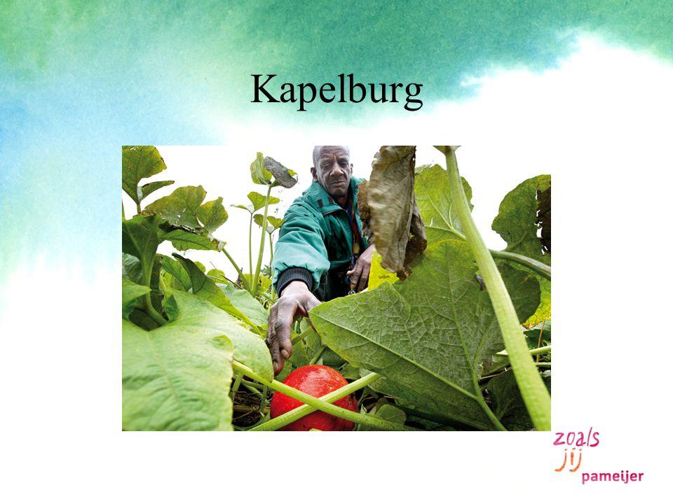 Kapelburg