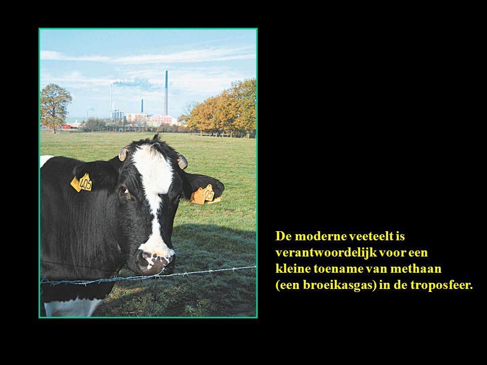 De moderne veeteelt is verantwoordelijk voor een kleine toename van methaan (een broeikasgas) in de troposfeer.