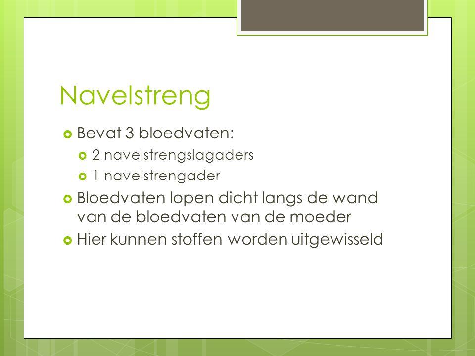 Navelstreng  Bevat 3 bloedvaten:  2 navelstrengslagaders  1 navelstrengader  Bloedvaten lopen dicht langs de wand van de bloedvaten van de moeder