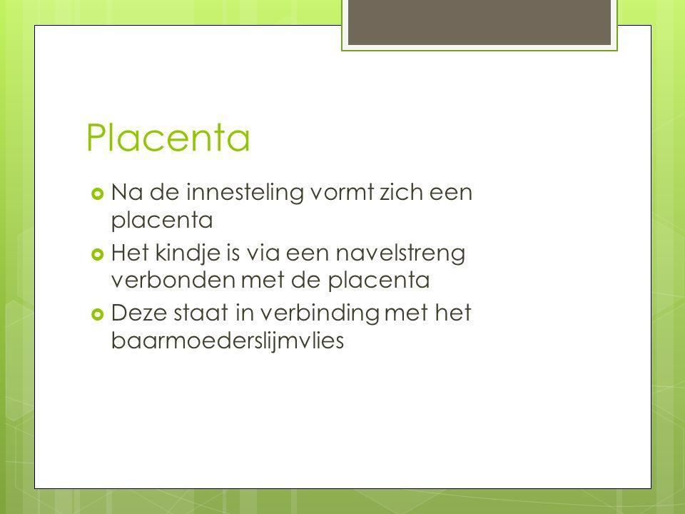 Placenta  Na de innesteling vormt zich een placenta  Het kindje is via een navelstreng verbonden met de placenta  Deze staat in verbinding met het