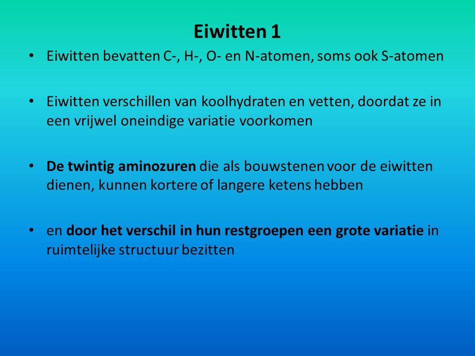 Eiwitten 1 Eiwitten bevatten C-, H-, O- en N-atomen, soms ook S-atomen Eiwitten verschillen van koolhydraten en vetten, doordat ze in een vrijwel onei