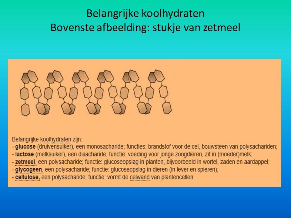 Belangrijke koolhydraten Bovenste afbeelding: stukje van zetmeel