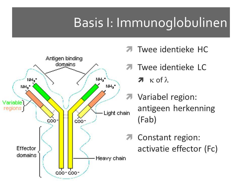 Basis I: Immunoglobulinen  Twee identieke HC  Twee identieke LC   of  Variabel region: antigeen herkenning (Fab)  Constant region: activatie effector (Fc)