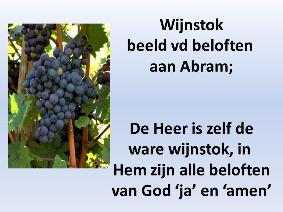 Wijnstok beeld vd beloften aan Abram; De Heer is zelf de ware wijnstok, in Hem zijn alle beloften van God 'ja' en 'amen'