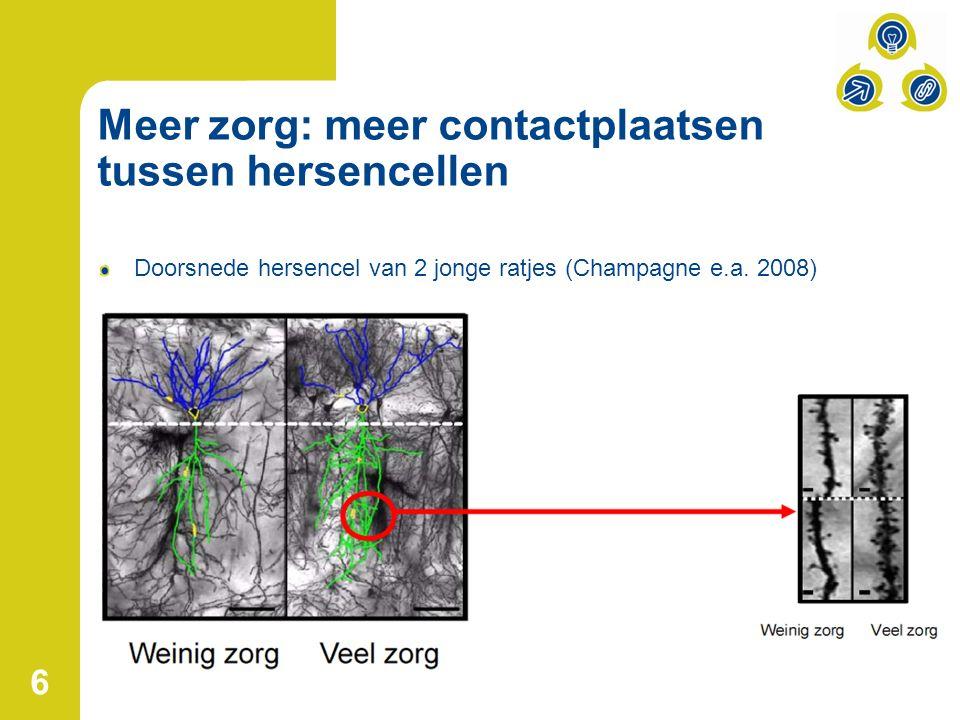 Meer zorg: meer contactplaatsen tussen hersencellen Doorsnede hersencel van 2 jonge ratjes (Champagne e.a.