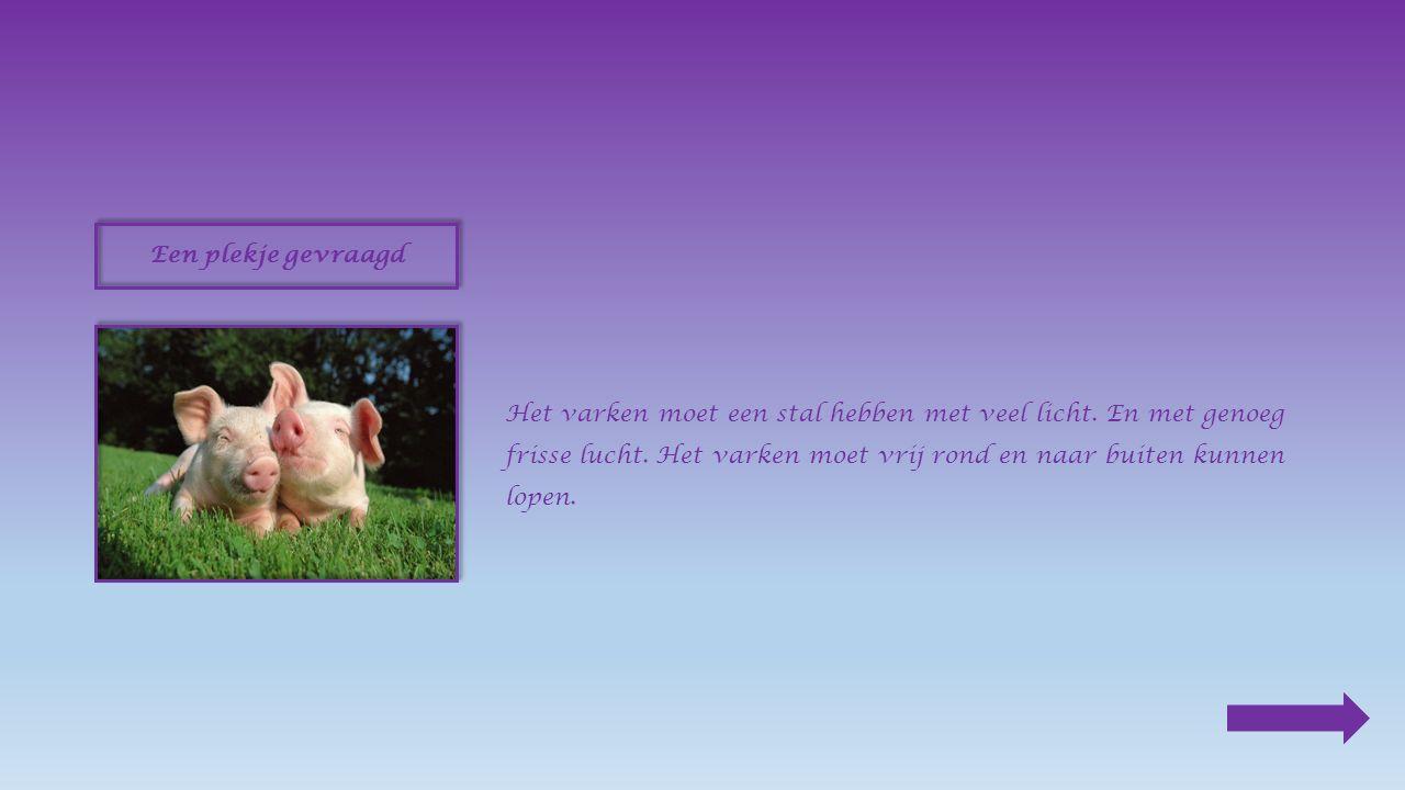 Verre familie Het varken is verre familie van het everzwijn.