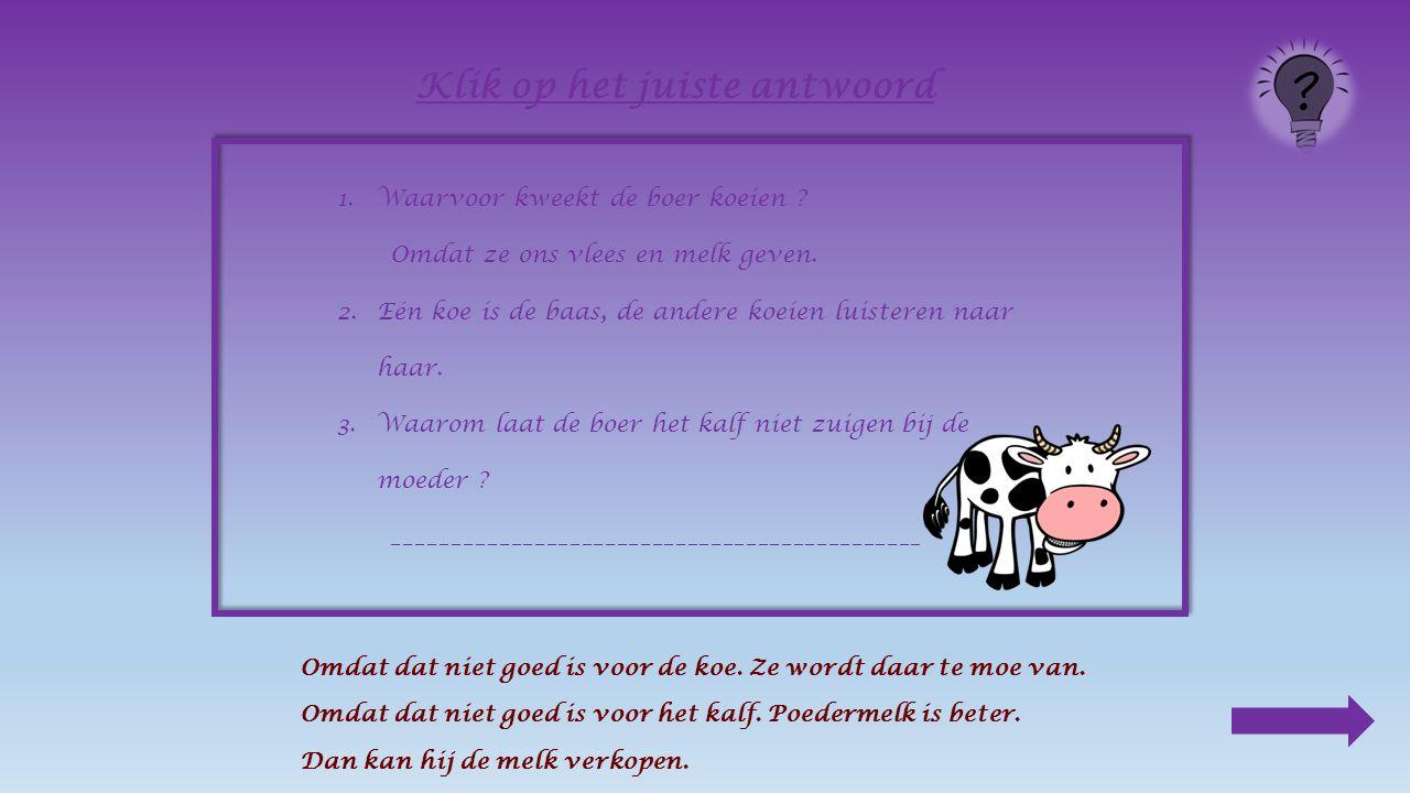 1.Waarvoor kweekt de boer koeien ? Omdat ze ons vlees en melk geven. 2.Eén koe is de _________, de andere koeien luisteren naar haar. Klik op het juis