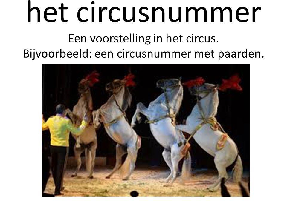 het circusnummer Een voorstelling in het circus. Bijvoorbeeld: een circusnummer met paarden.