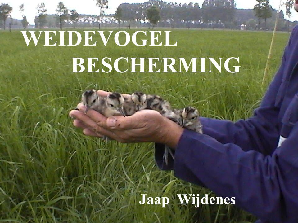 Jaap Wijdenes WEIDEVOGEL BESCHERMING