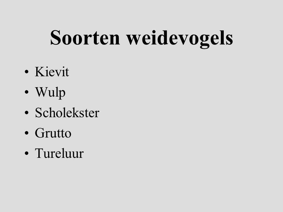 Soorten weidevogels Kievit Wulp Scholekster Grutto Tureluur