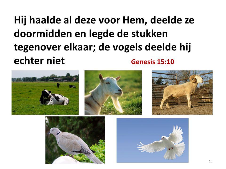 Hij haalde al deze voor Hem, deelde ze doormidden en legde de stukken tegenover elkaar; de vogels deelde hij echter niet Genesis 15:10 15