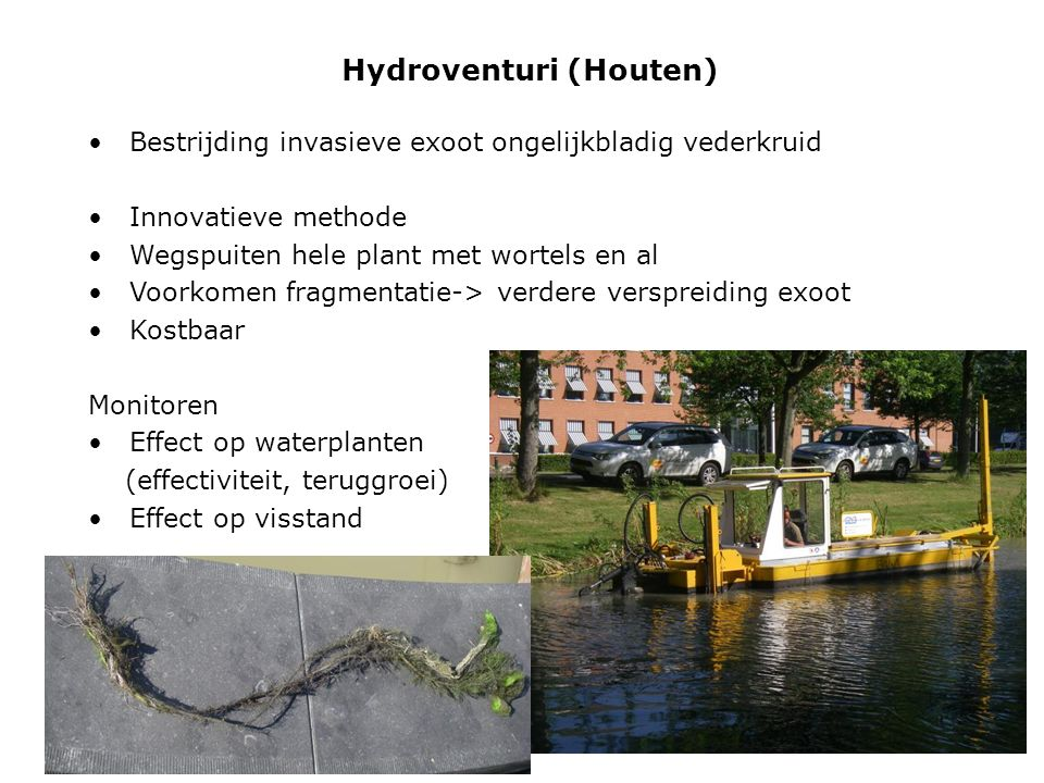 Hydroventuri (Houten) Bestrijding invasieve exoot ongelijkbladig vederkruid Innovatieve methode Wegspuiten hele plant met wortels en al Voorkomen fragmentatie-> verdere verspreiding exoot Kostbaar Monitoren Effect op waterplanten (effectiviteit, teruggroei) Effect op visstand