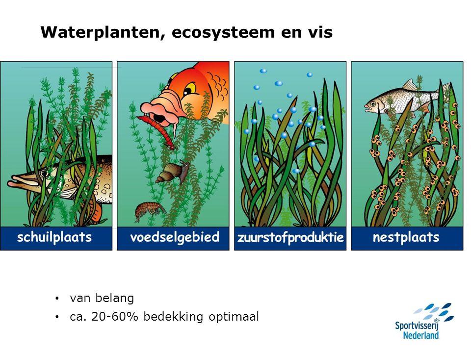 Waterplanten en vis Veel onderwaterplanten – sterke zuurstofschommelingen