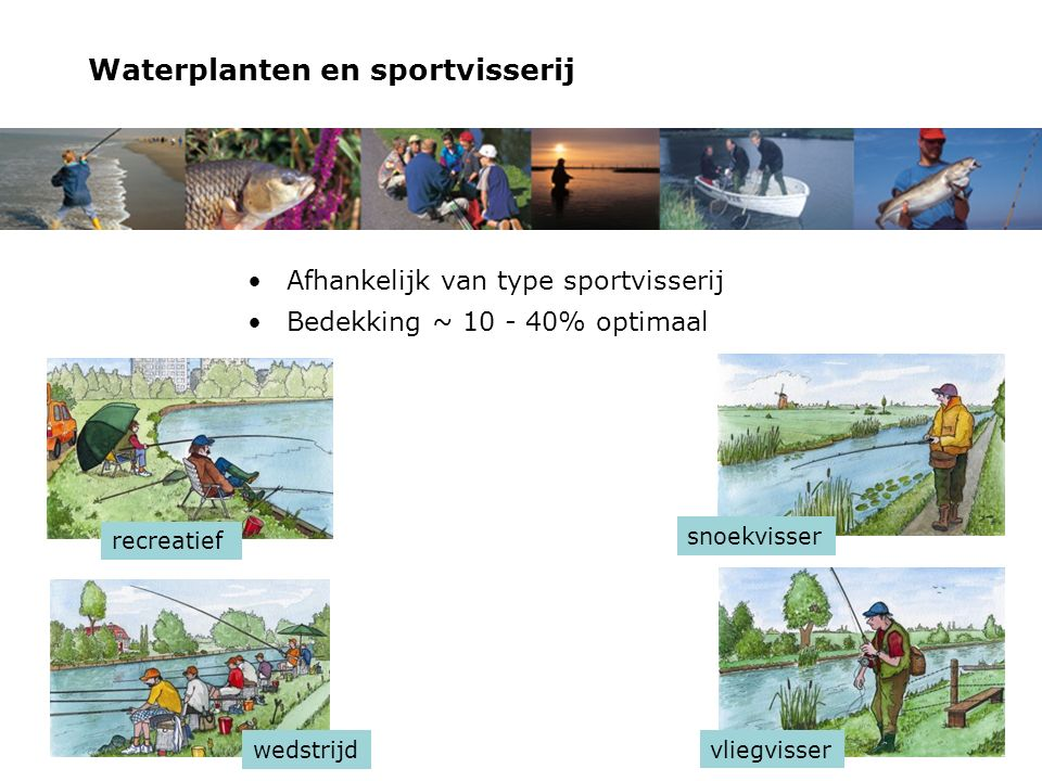 Waterplanten en sportvisserij Afhankelijk van type sportvisserij Bedekking ~ 10 - 40% optimaal recreatief wedstrijd snoekvisser vliegvisser