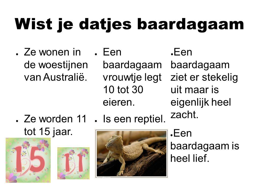 Nog meer weetjes baardagaam ● Baardagaam eieren moeten 50 tot 75 dagen warm blijven.