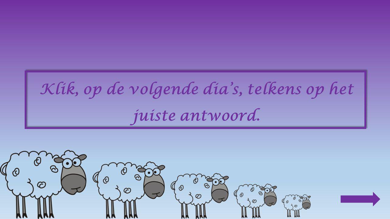 Toch anders Er leven nog altijd schapen in het wild.