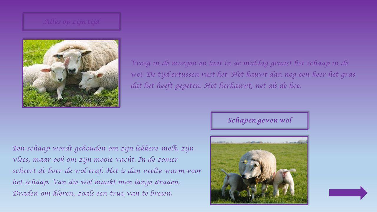 Allerlei vormen We kennen veel verschillende soorten schapen.